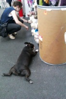But Swatch, why are you barking and going doo-lally at this nice shopper? Or are you scared of fabric?